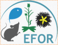 8th annual meeting of the EFOR network, 3d May 2017